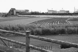 農地が広がるJR島本駅西地区で、開発計画が持ち上がっています。